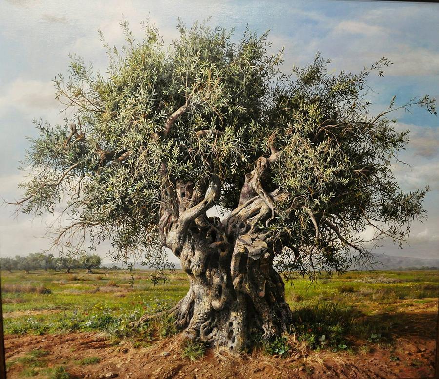7-olive-tree-elidon-hoxha