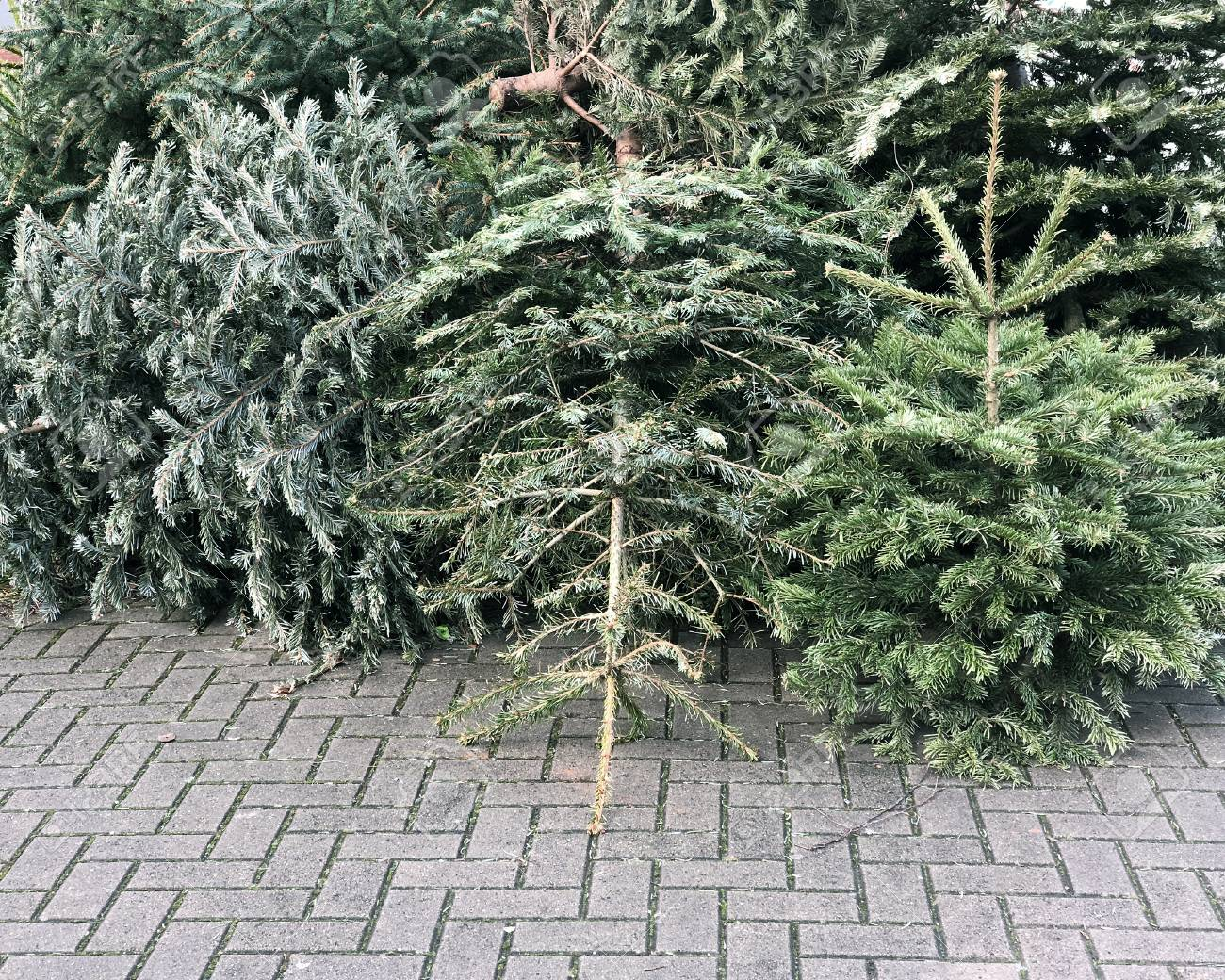 discarded christmas trees piled on pavement for trash collection