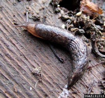 slugs-and-snails_7_3931630412
