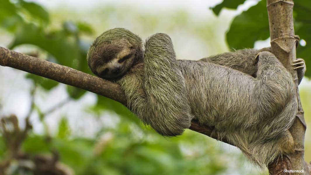 Sloth-header_tcm25-544723